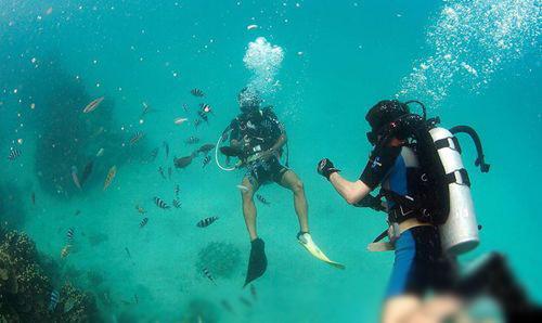 壁纸 海底 海底世界 海洋馆 水族馆 500_298