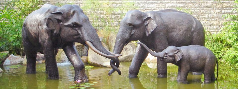 广州香江野生动物园门票